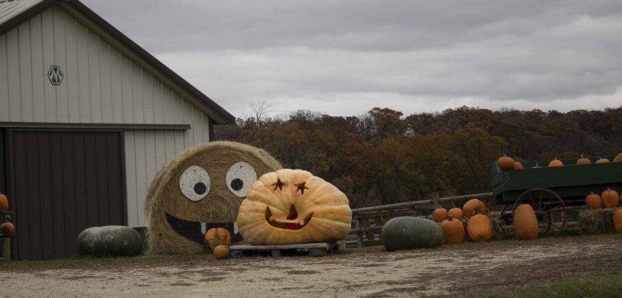 1000 lbs. pumpkin
