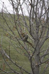 Squirrel by Linn Hall